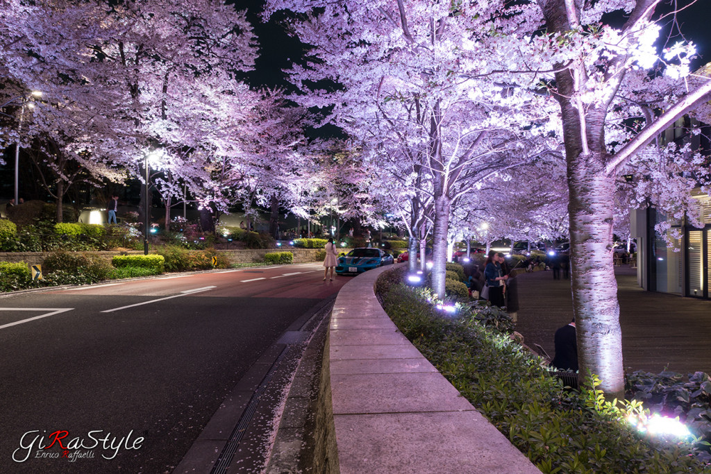 Cherryblossom-road