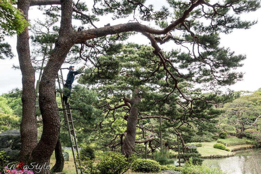 Un giardiniere intento alla cura del parco Yoyogi Gyoen