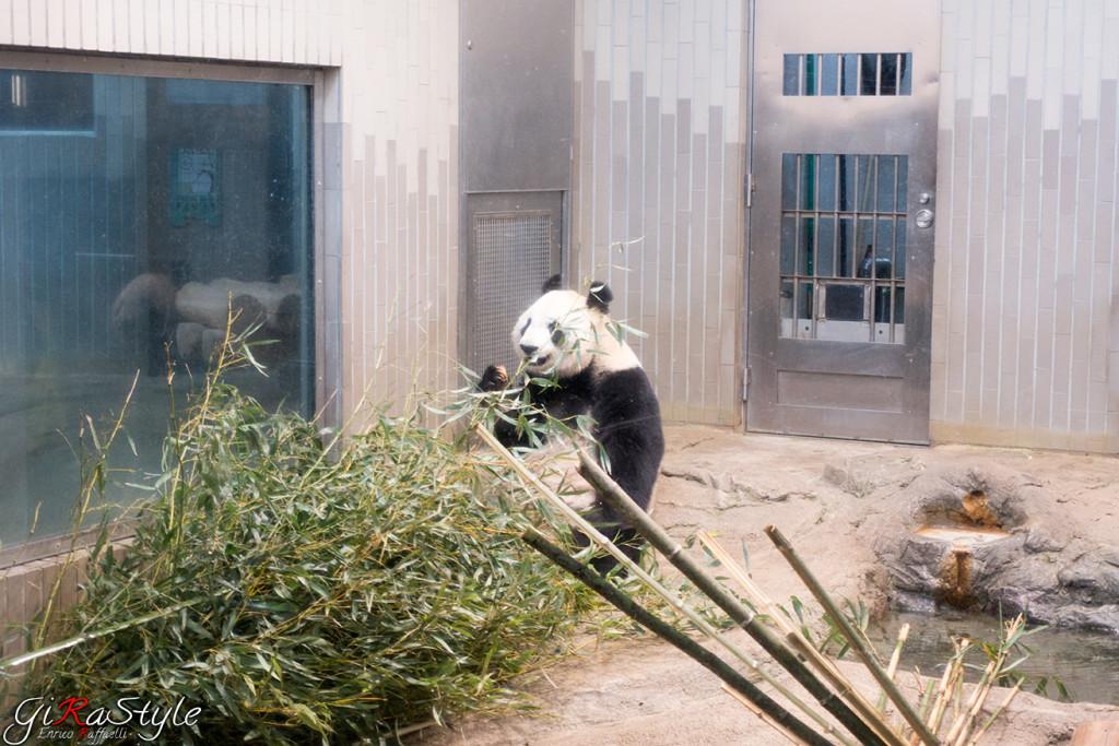 panda-fame
