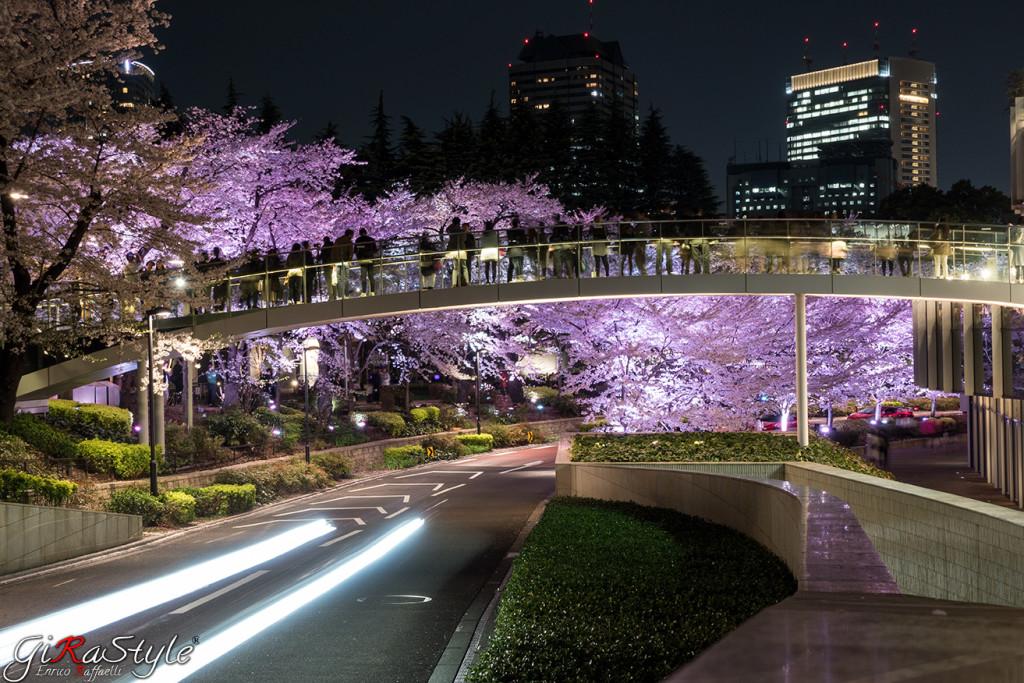 ponte-con-fiori-di-ciliegio