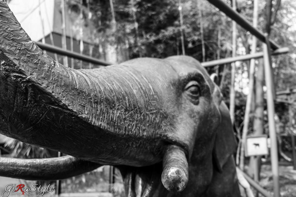 stauta-dell'elefante
