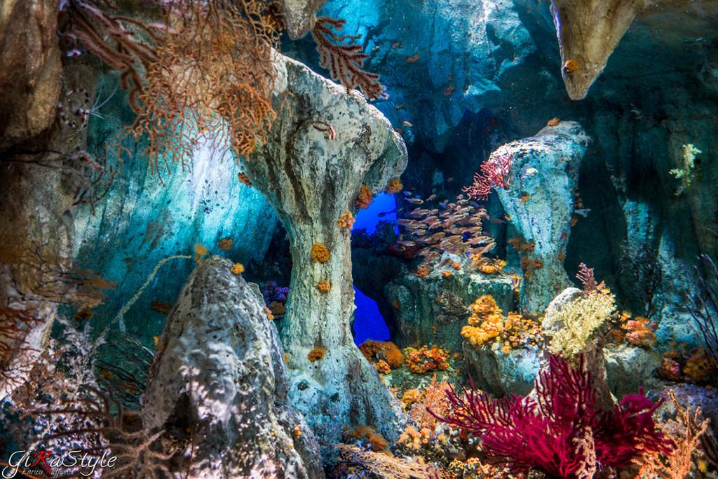 acquario-marino