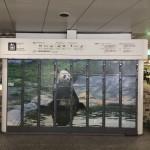 Panda disegnati su armadietti Coin Locker