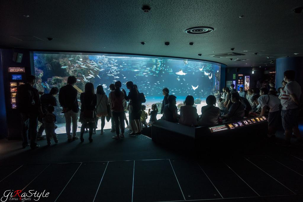 interno-acquario-tokyo