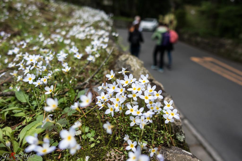 mazzetto-di-fiori