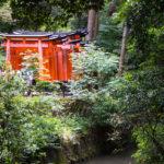 il fushimi Inari montagna dei tori rossi
